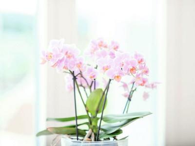 Fleur visiteurs