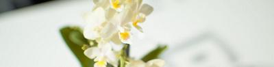 Detailansicht Blumen
