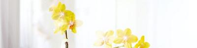 Nahaufnahme einer gelbblühenden Orchidee